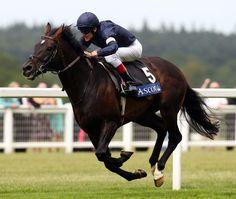 Длина имени беговой лошади не должна превышать 18 букв. (Длинные клички вызывают трудности при записи).