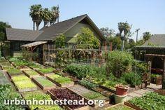 Une famille américaine fait pousser 3 tonnes de nourriture bio par an dans son jardin   Bio à la une
