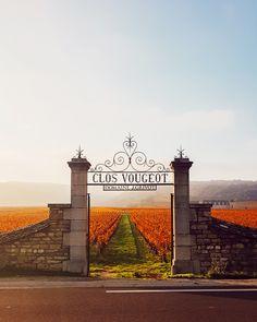 Paysage de Bourgogne à l'Automne. Le clos Vougeot Clos Vougeot, Louvre, Building, Travel, Family Travel, Autumn, Viajes, Buildings, Trips