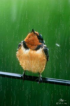 A little bird receiving a shower from Heaven! #Totesraingear
