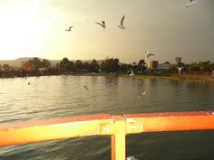 Seagulls from Boat Sea Of Galilee, Boat, Celestial, Sunset, Outdoor, Sunsets, Outdoors, Dinghy, Boats