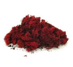 Finland Reindeer moss Red - is a glycerine treated, easy to use decorative moss ideal for floral arrangements, planted bowls & wire rings. Pack size: 500g. Also available in dark green, natural, olive & moss green.
