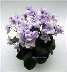 Amadie Trail