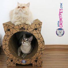 http://www.catmypet.com/gatunel-