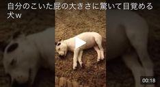 【骨抜き注意】戌年だから犬動画10選♡犬ってかわいい!面白い! - All in Trend