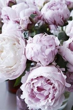 Love these lavender ombre peonies