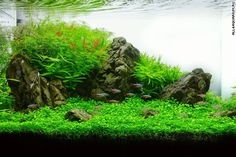 This tank by a Turkish aquascaper finished third at the 2013 Planted Design Contest. 'Charm of Light'