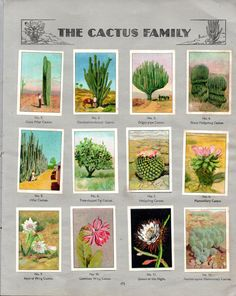 NESTLE': Wonders of the World (1932 - The Cactus Family)