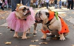 We love bulldogs!