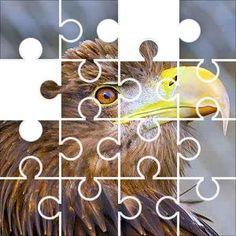 Sea Eagle Jigsaw Puzzle, 100 Piece Classic. A White Tailed Sea Eagle (Haliaeetus albicilla).  It is considered a close