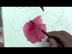 How To Paint the Red Hibiscus Flower  In Watercolor By Ross Barbera - very well done 3-part video - well explained, easy to understand, makes you feel like you could do it