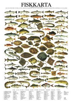 Fiskkarta - poster  plansch