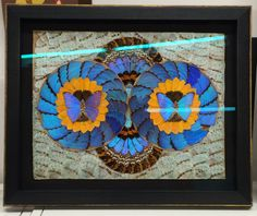 collage made of real butterfly wings, mounted in a shadowbox frame with museum glass by ART-EN-CIEL Collage Making, Butterfly Wings, Shadow Box, Custom Framing, Museum, Patterns, Simple, Frame, Glass