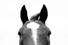 Good Intentions and Cruelty to Horses