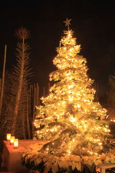 Love Spells That Work in Oraibi Live Christmas Trees, Xmas Tree, All Things Christmas, Winter Christmas, Christmas Time, Christmas Fireplace, Merry Christmas, Gold Christmas Decorations, Holiday Decor