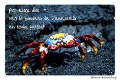 No sé qué me pasa... últimamente veo la bandera de #Venezuela en todas partes ♥.♥