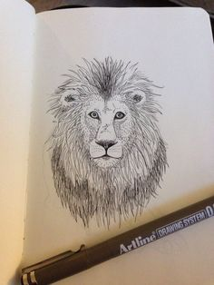 Lion. Ink drawing