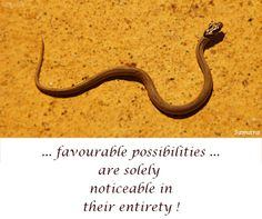 ... favourable #possibilities...are solely noticeable in their #entirety !