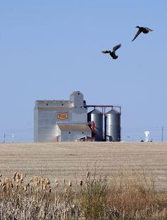Grain Elevators, Saskatchewan, Canada
