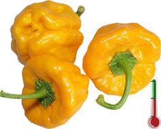 Pimentas Art | 20 Sementes de Pimenta Jamaican Yellow *Frete Grátis*