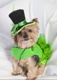 Putting on the St. Paddy's Day Ritz
