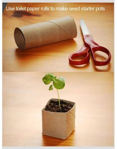 Make seeding planters out of toilet paper tubes!
