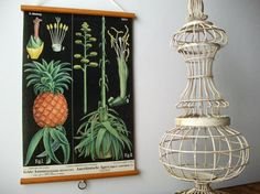 Vintage Pull Down Educational Chart Style Wall Hanging Print on Fabric with Stained Wood Trim  - Botanical Pineapple