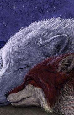 Lay down your sweet and weary head. by VixenDra on DeviantArt Cartoon Wolf, Wolf Artwork, Wolf Love, Fox Art, Sci Fi Art, Mythical Creatures, Werewolf, Spirit Animal, Animal Drawings