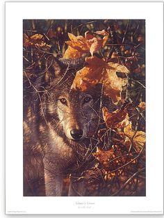 Nature's cover- Collin Bogle imageconscious.com