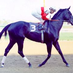 The stunning Ruffian