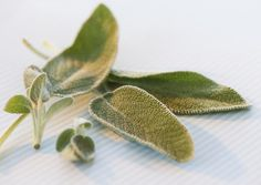 How Sage is Healthy For Your Brain