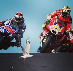 Famous Seagull !!