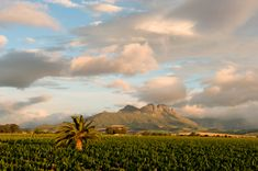 Villiera Vineyard. We at Villiera value the preservation of the natural ecosystem by using environmentally friendly farming practices. #VillierWines #Villiera