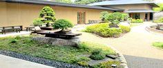 bonsai-garten-gartengestaltung-mit-bonsai-8