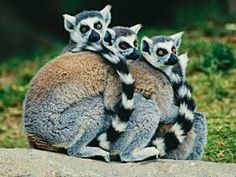 June 26 – Madagascar