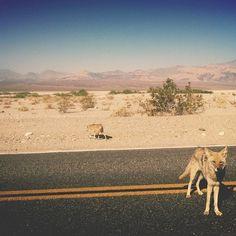 organized-crime: Made two new friends. Desert Dream, Desert Life, Desert Snow, Fallout New Vegas, Fallout Game, New Mexico, Route 66, Nevada, Desert Aesthetic