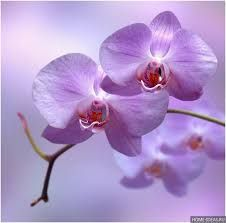 Картинки по запросу орхидея картинки