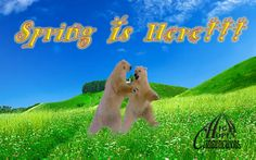 Spring is Here www.highhopescommunications.ca Spring Is Here, Dinosaur Stuffed Animal, Animals, Animales, Animaux, Animal, Animais