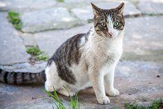 cats funny,cats diy,cute cats,cats breeds  #flychord #flychordpiano
