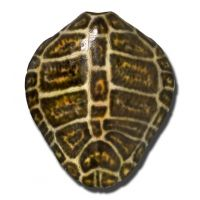 Turtle Shell Wall Collection - Brown Kemps Ridley Turtle