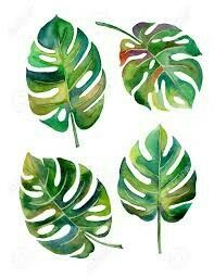 Monstera leaf illustration