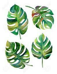 Monstera leaf illustration