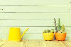 Viisi+hyödyllistä+vinkkiä:+Näin+saat+mehikasvisi+kukoistamaan Watering Can, Canning, Vogue, Gardening, Landscaping, Vases, Home Decor, Architecture, Take Care