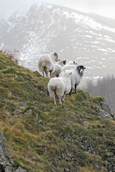 The Guild Photographic Award 2009: Livestock | British Guild of Agricultural Journalists