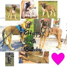 l_o_v_e Happy birthday 😍 . 4th Birthday, Austria, Indie, Turquoise, Happy, Dogs, Pictures, Animals, Photos