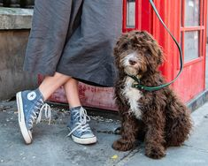 Rudi the Cockerpoo photographed by specialist dog photographer Emma O'Brien in Shoreditch, London.    #londondogs #cockerpoo #shoreditch #london #streetart #londongraffiti #londonphotography #londonphotoshoot #dogphotoshootideas #redphonebox