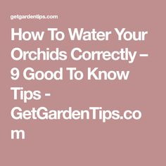 How To Water Your Orchids Correctly – 9 Good To Know Tips - GetGardenTips.com