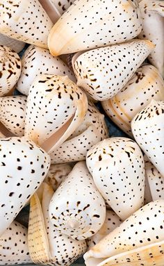 You never know what kind of beautiful shell you may spot on Captiva Island. Have you ever come across one of these beautiful spotted cones? Add these to your list of shells to find next time you stay at 'Tween Waters Inn on Captiva Island, Florida. www.tween-waters.com