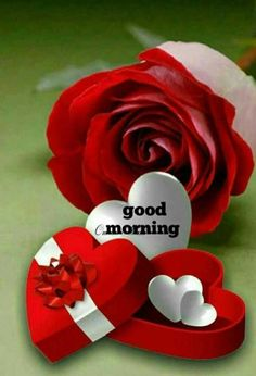 New good morning images for love ~ Good morning inages Good Morning Sunshine Quotes, Good Morning Gift, Good Morning Friends Images, Good Morning Romantic, Lovely Good Morning Images, Good Morning Roses, Latest Good Morning, Good Morning Picture, Good Morning Messages