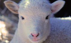 5 Reasons Farm Animals Were Grateful in 2015